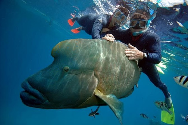 8 best places for scuba diving in the world the holidays - Best place to dive the great barrier reef ...