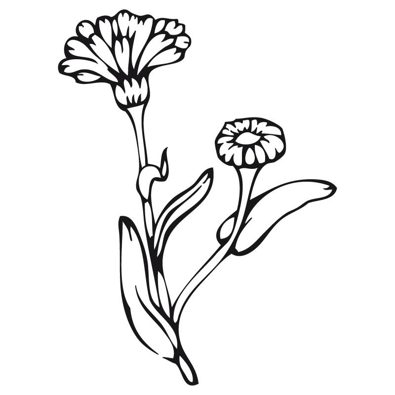 Pz c flores dibujos for Plantas ornamentales para colorear