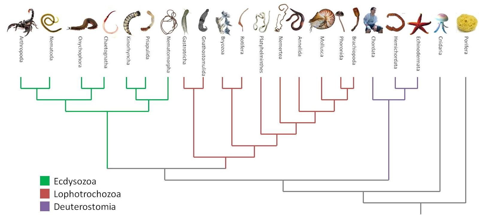 Invertebrate classification worksheet