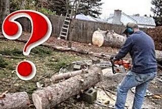 Έκοβε ένα δέντρο άλλα… αυτό που έπαθε δεν το περίμενε με τίποτα