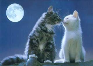 Gatos besándose bajo la Luna