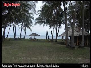 wisata kelapa muda