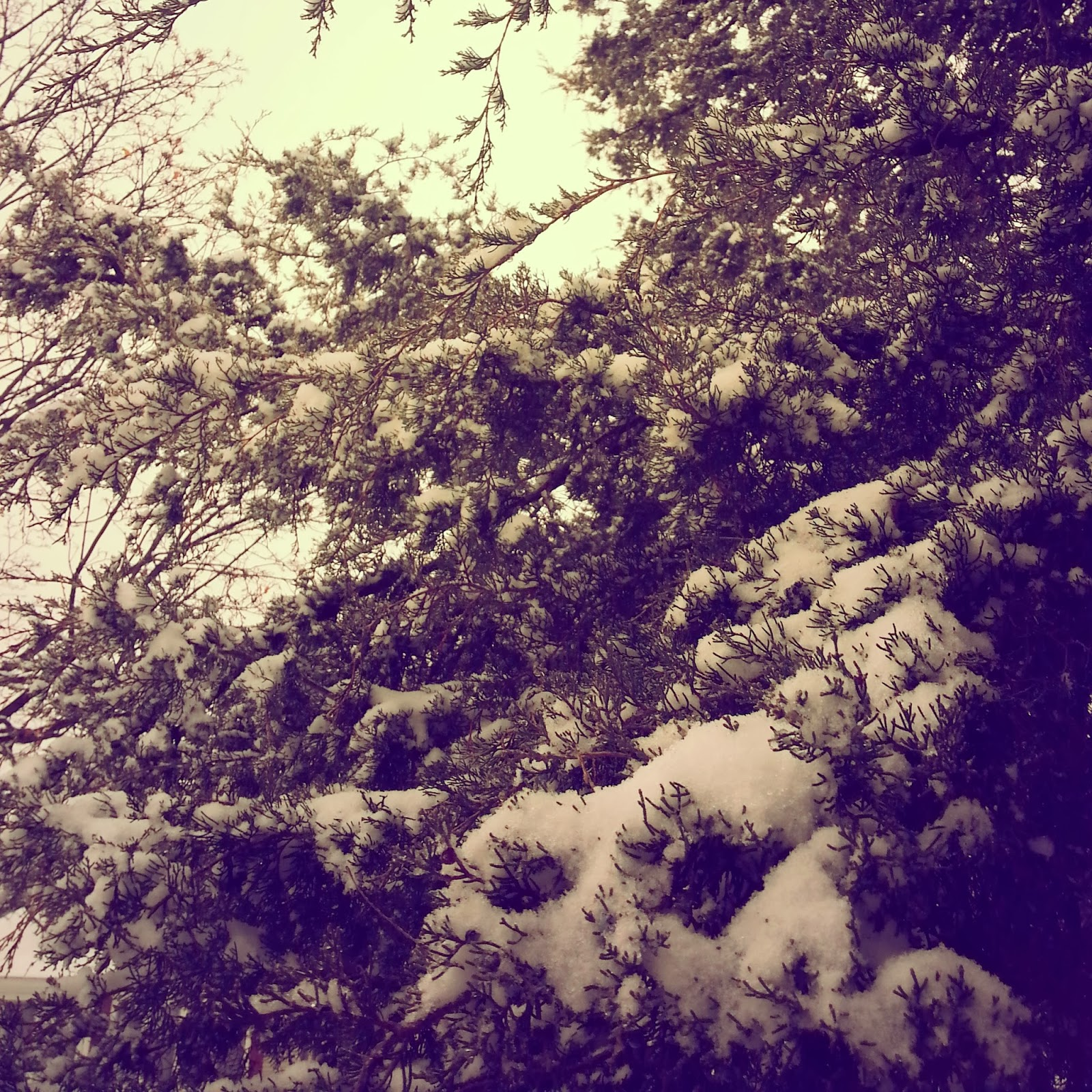 pretty snowy tree
