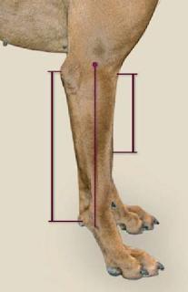 pata cão