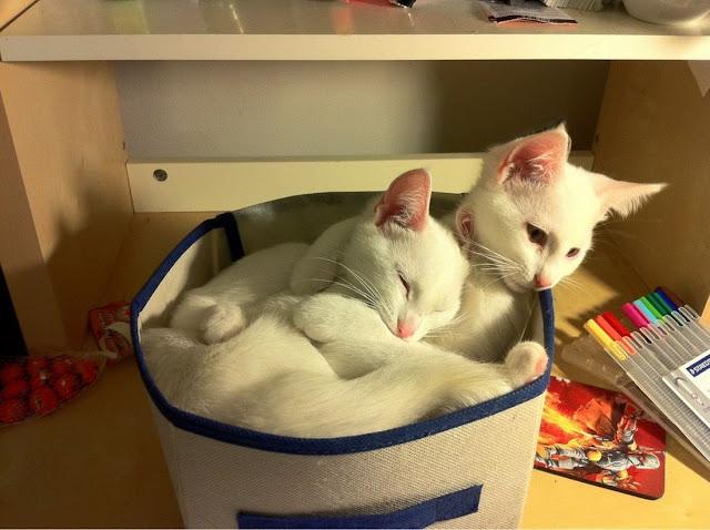 Funny cats - part 48, funny cat pictures, cute cats, cat photos, cat pics