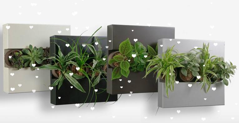 Flowerbox cuadro vegetal jardines verticales y - Plantas para jardines verticales ...