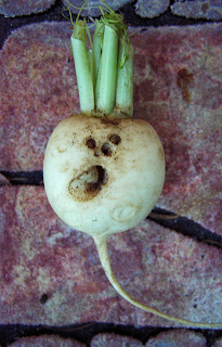 White Turnip with Eyes, Nose, Mouth