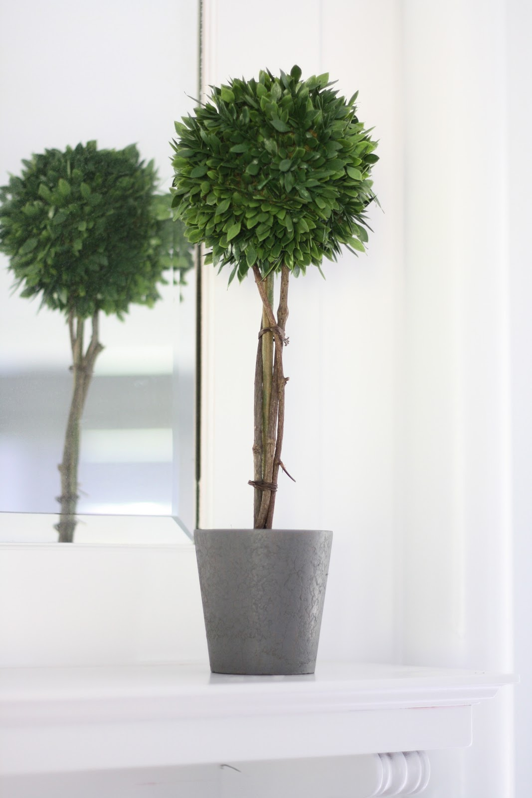 boxwood topiary diy