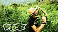 Documental Kings of cannabis rey del cannabis