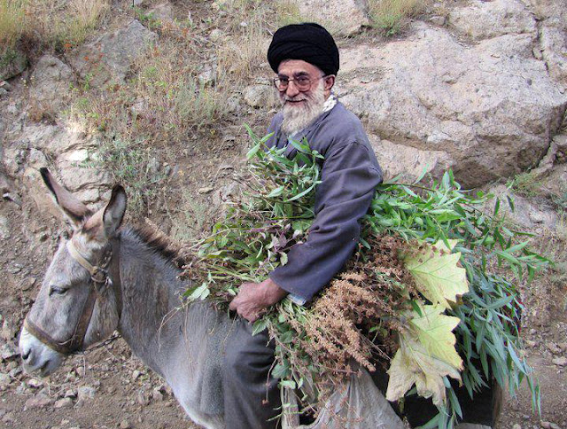 قیمت خرید دلار در مشهد