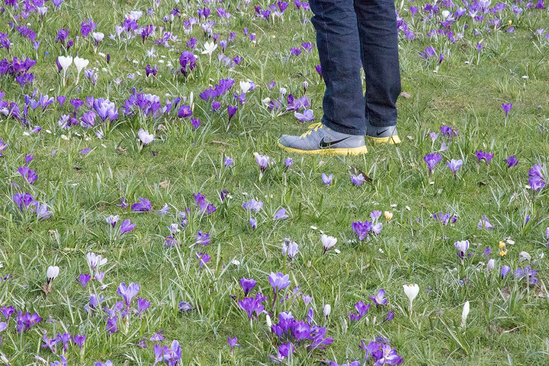guy standing amongst crocuses