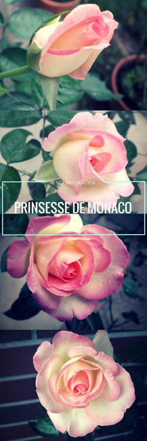 プリンセス ドゥ モナコ