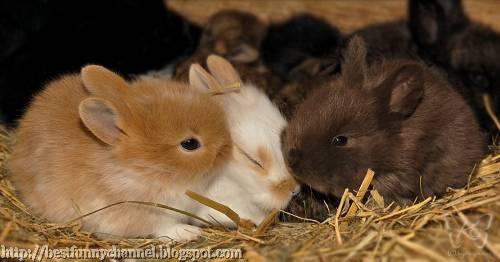 Cute bunnies.