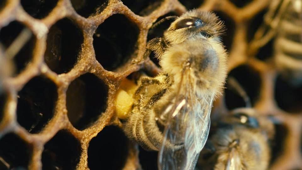 http://www.cantinhodasaromaticas.pt/loja/workshop-loja/a-vida-das-abelhas/