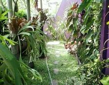 Taman Gaya Tropis