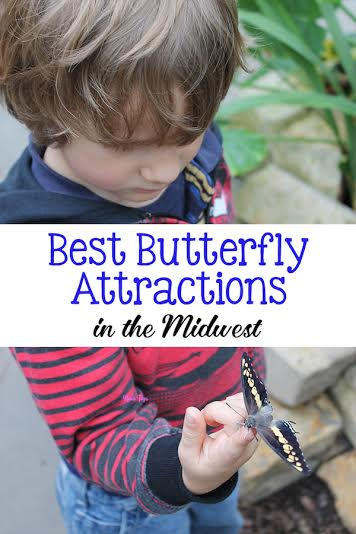 Best Butterfly Attractions in the Midwest