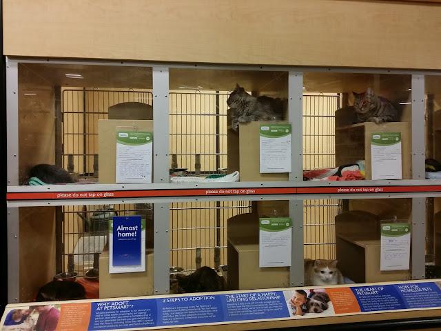 PetSmart Adoptable Cats #MyCatMyMuse