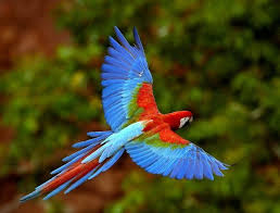 Colorful birds in amazon river forest