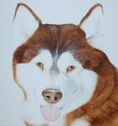 Pet Portrait Malamute Oil on Canvas