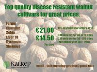 Walnut Cultivars