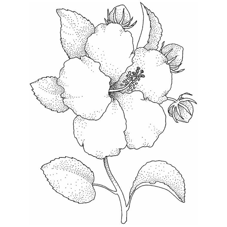 La merveilleuse vie de maman juillet 2013 - Dessin d hibiscus ...
