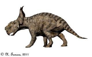 pachyrhinosaurus skull  Fig 2.- Pachyrhinosaurus canadensis.