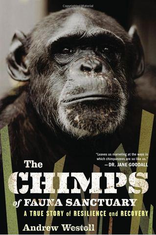 Chimp Trainers Daughter Chimps Of Fauna Sanctuary Honors