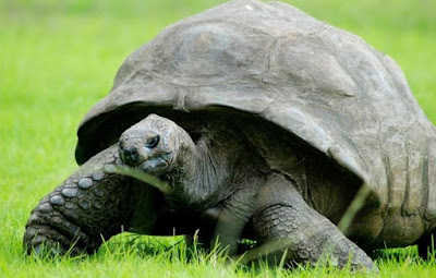 Inilah Hewan Tertua di Dunia Berusia 183 Tahun