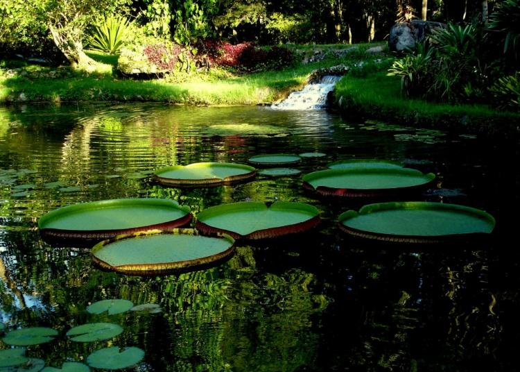Guia de Passeio Jardim BotânicoRJ