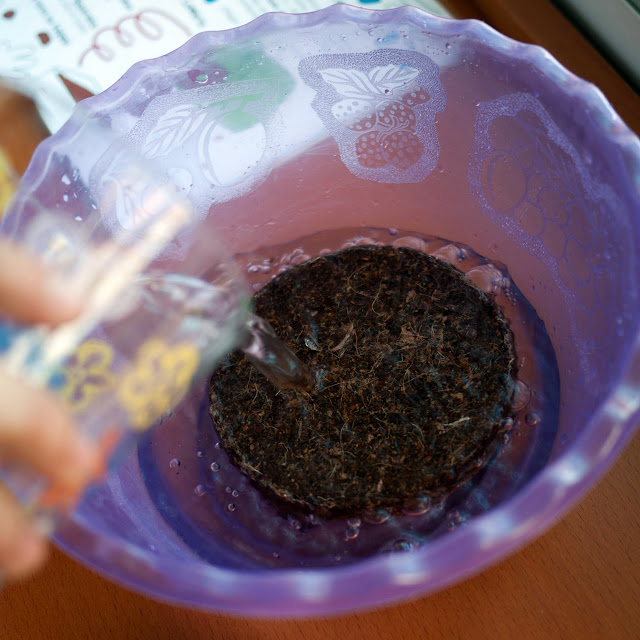 Hidratar la fibra de coco