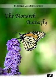 The Monarch Butterfly DVD