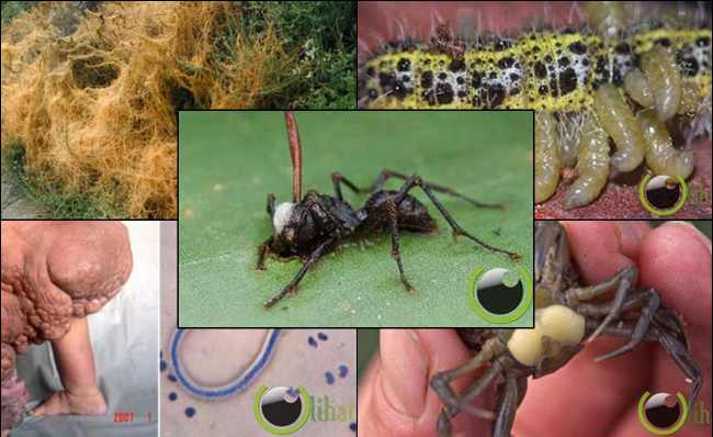 9 Hewan Parasit yang paling Menyeramkan dan Menjijikkan