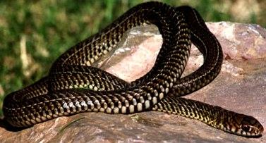 Foto de la serpiente
