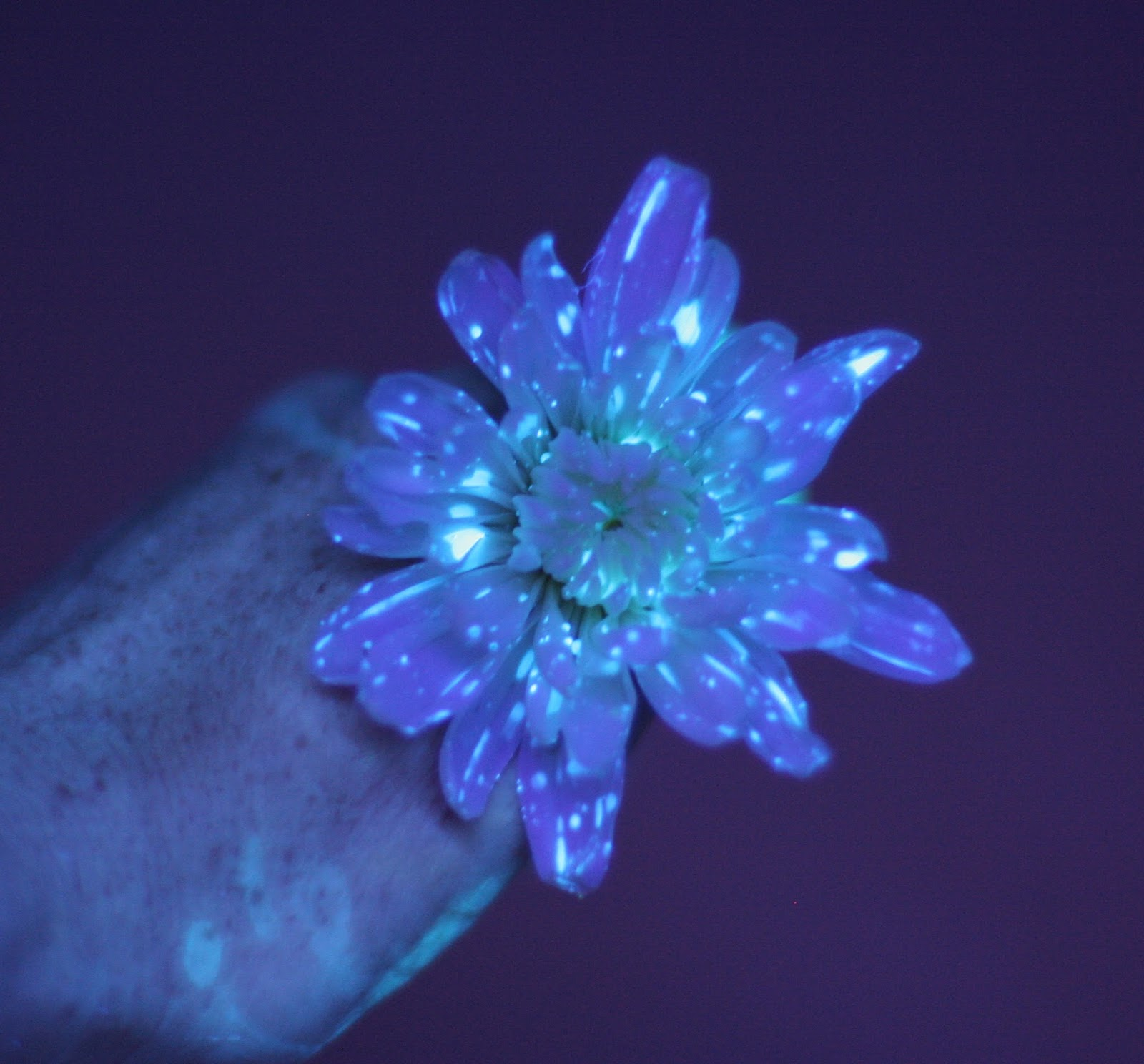 Flower Science Experiment for Kids DIY Glowing Flowers