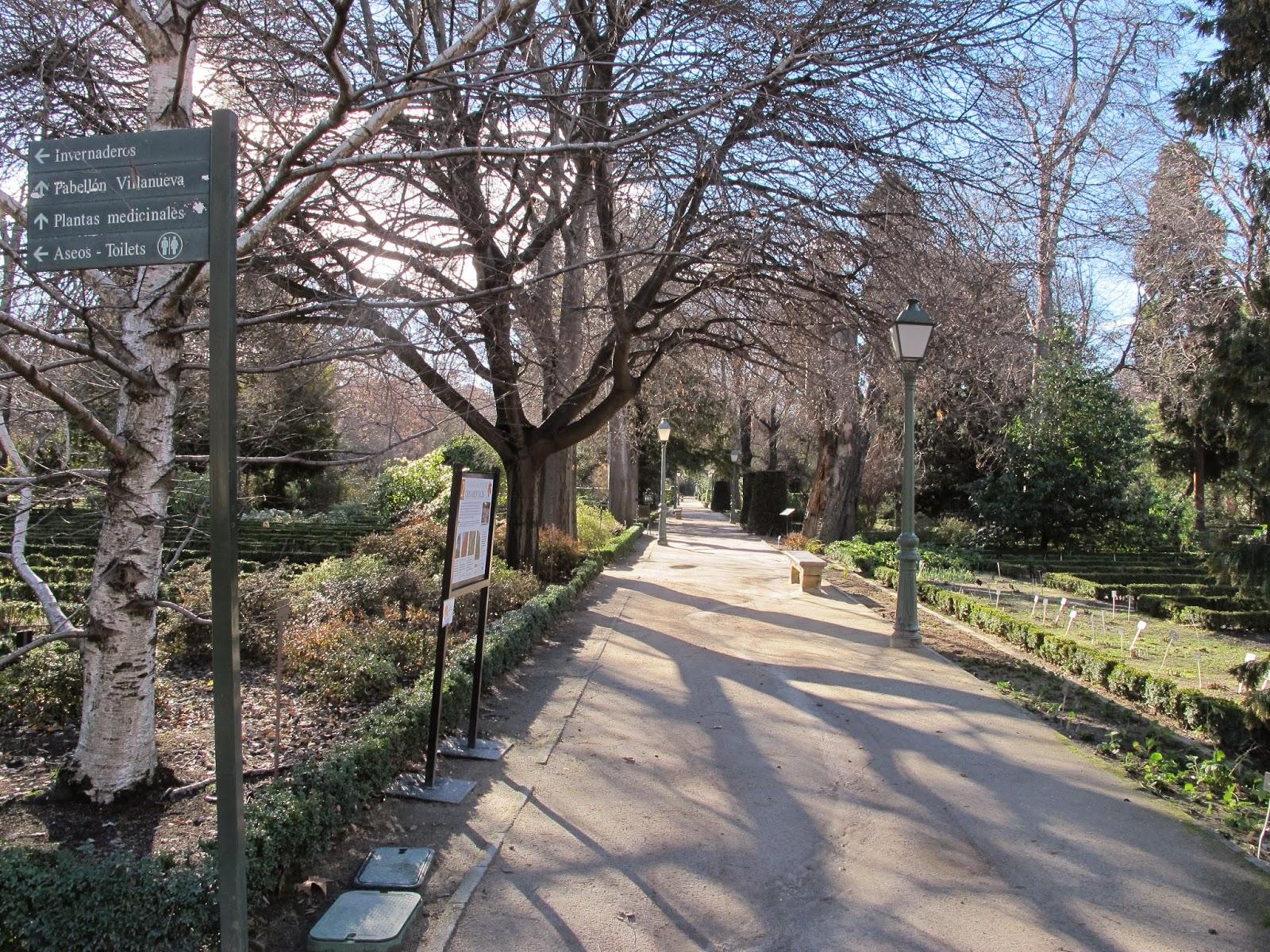 Rboles de madrid el gato por las ramas cipr s del real for Jardin cipres