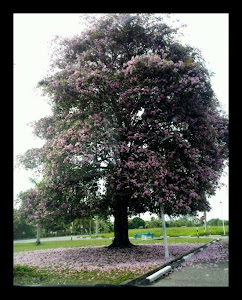 Jadilah Seperti Pokok