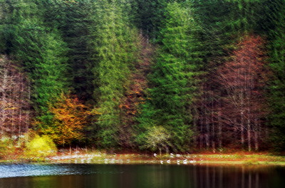 Abstract image of the autumn forest around Génin lake