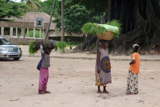 Mujeres llevando las plantas de arroz para transplantarlas