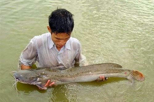 Asian Red Tailed Catfish Hotpot in Serepok River (Lẩu Cá Lăng ở Serepok)2