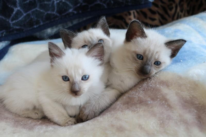 Mitzi's kittens