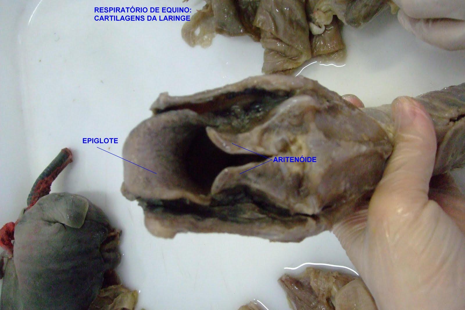 Medicina Veterinária: Anatomia - Sistemas Orgânicos