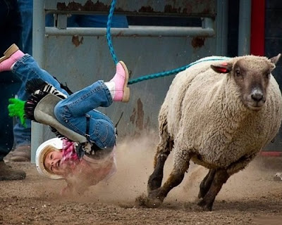 Caida - Monta de oveja
