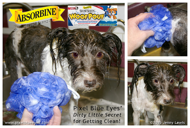 Image of Pixel Blue Eyes standing in kitchen sink getting washed with Absorbine WoofPouf dog washing pouf