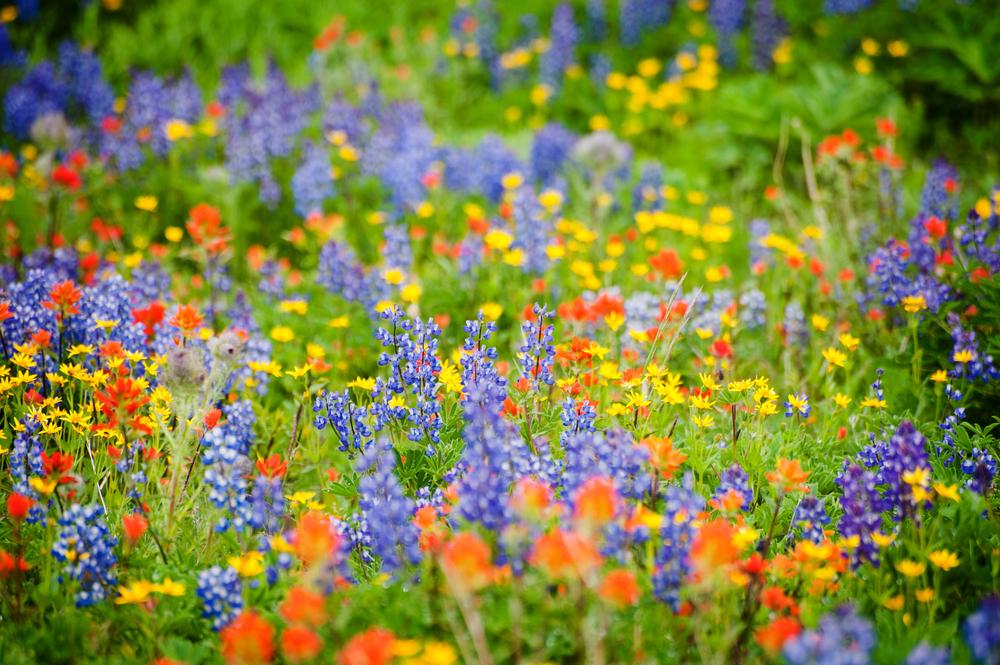 cheap pretty flowers  most popular flower garden, Natural flower