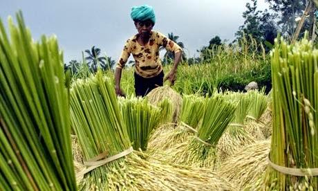 http://thejakartaglobe.beritasatu.com/business/basf-spies-opening-rice-goal/