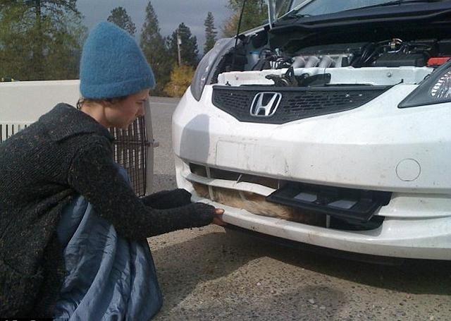 Coiote fica preso dentro do motor de um carro após ser atropelado