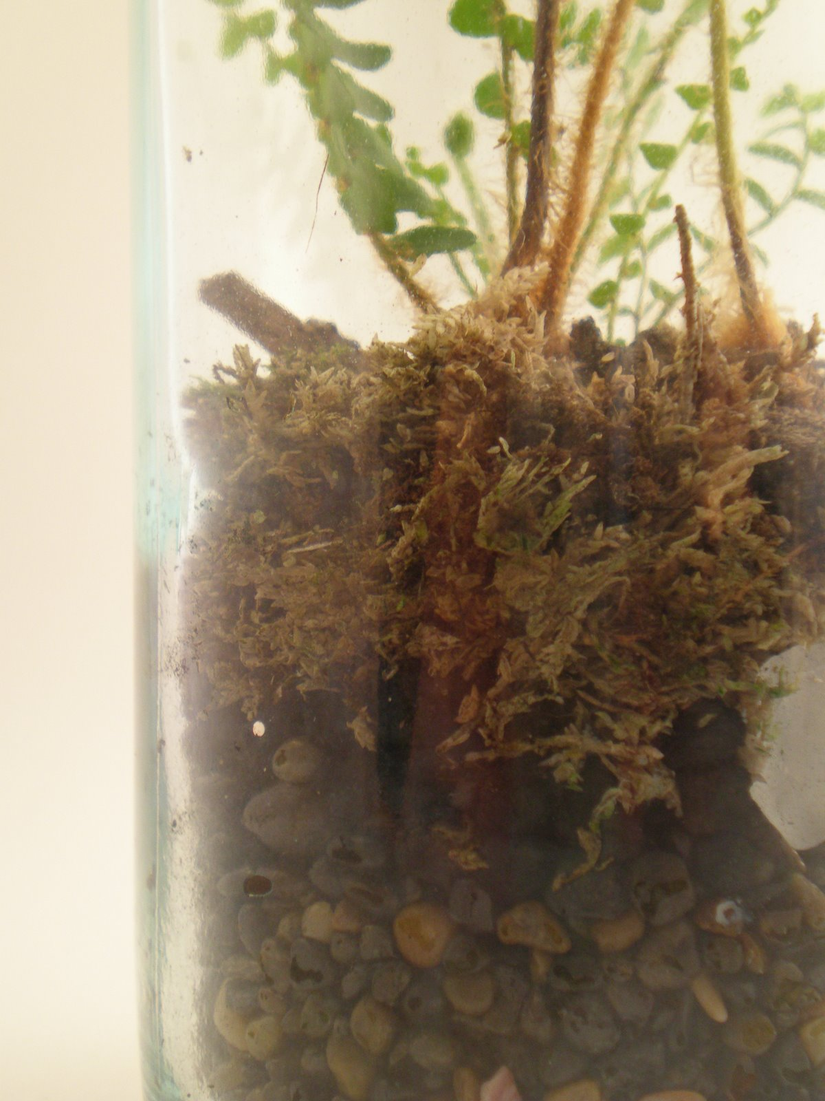 The fern and mossery 5 tips from a terrarium pro for Top layer of soil