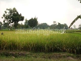 tanah dijual di paingan maguwoharjo
