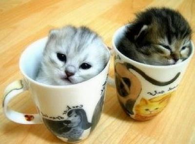 ===Dentro de una taza=== Gatoraro