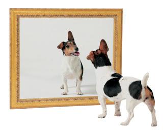 Perro se mira en espejo